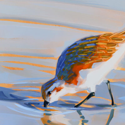 wading shorebird walking in the water, sandpiper bird, 6x6 oil painting.