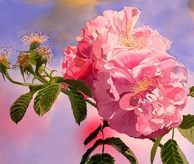 rose watercolor flowers pink roses original PJ Cook