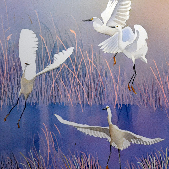 white birds landing in a marsh original watercolor by PJ Cook