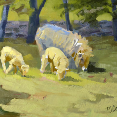 sheep and 2 lambs grazing in this oil painting done alla prima PJ Cook