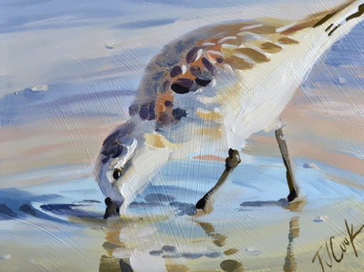 sandpiper bird 5x5 oil on panel, water reflections at the beach