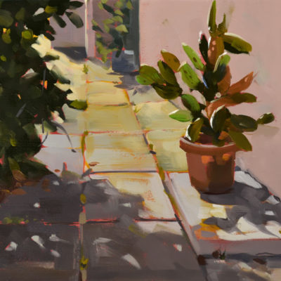 Morning Cactus Spotlight, 9 x 12 oil on canvas