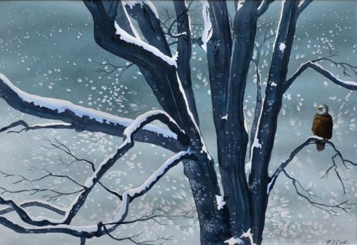 Maple tree with a bald eagle perched during snowstorm original watercolor by PJ Cook.