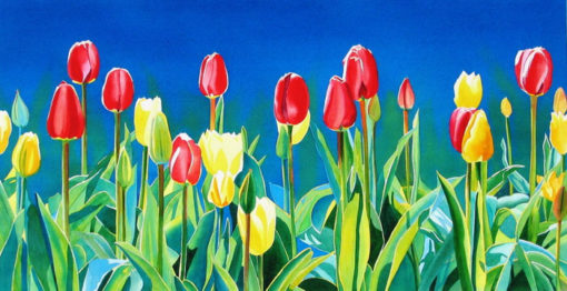 watercolor of red and yellow tulips by PJ Cook.